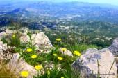 Mala črnogorska tura