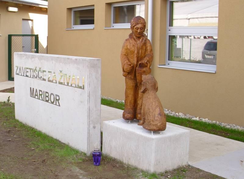 V Zavetišču za živali v Mariboru še nekaj prostora