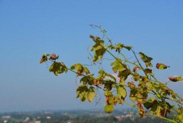 Jesen na Sv. Ani bodo tudi letos zaznamovali Postičevi dnevi