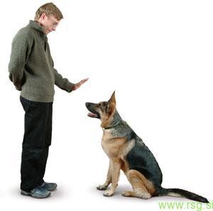 Spomladanski tečaji šolanja psov tudi v Lenartu