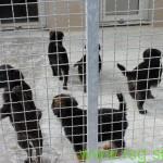 Za živali v zavetišču izdelali ležišča in zbirali odeje