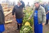 FOTO: V Voličini postavili 17 metrov dolg presmec