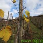 Danes v Lenartu o varstvu sadnega drevja, jutri o varstvu vinske trte