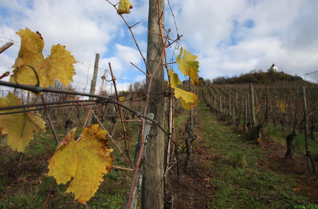 O aktivnostih trojiških vinogradnikov