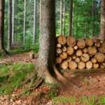 Previdno pri delu v gozdu