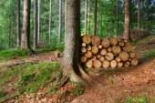 V Cerkvenjaku, v pisarni občine, dvakrat mesečno na voljo revirni gozdar