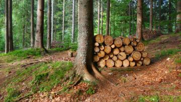 Ali Slovenci znamo izkoristiti edini vir, ki ga imamo res v izobilju?