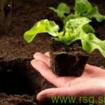 Nora pomladna izmenjava sadik in semen v Cmureku