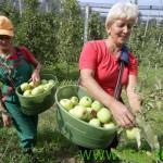 Na Štajerskem potrebujejo 355 sezonskih delavcev