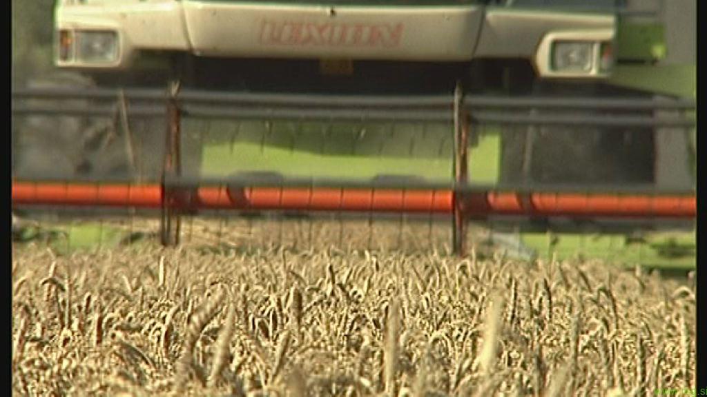 Kmetijske subvencije v letošnjem letu