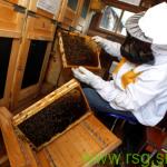 Dan odprtih vrat Učnega čebelnjaka v Jurovskem Dolu