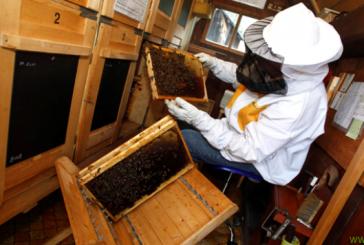V Cerkvenjaku si prizadevajo za večjo povezanost čebelarjev
