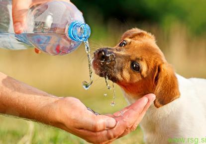 V vročih dneh ustrezno poskrbite za živali