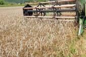 V Pomurju začeli žeti pšenico, cena zanjo še ni določena