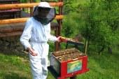 Čebelarji letos s povprečno letino, mnogi so uspeli obnoviti čebelje družine