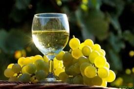 15 let društva vinogradnikov Sv. Trojica