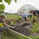 Z ekološkim kmetijstvom v smer trajnostnega razvoja