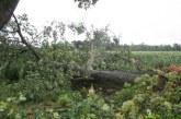 Sanacija po decembrskem vetrolomu v državnih gozdovih stekla, na našem območju največ škode v Lovrencu na Pohorju