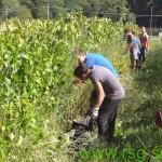 V našem delu Slovenije 350 sezonskih delavcev v kmetijstvu