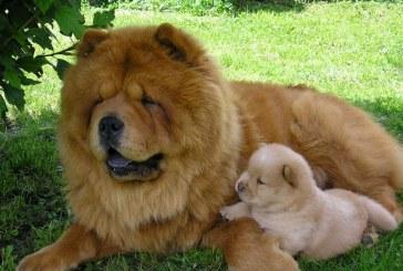 Na Ptuju psi dobrodelni za pse