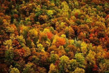 Krajani ne dovolijo sečnje niti hektarja Rogoškega gozda