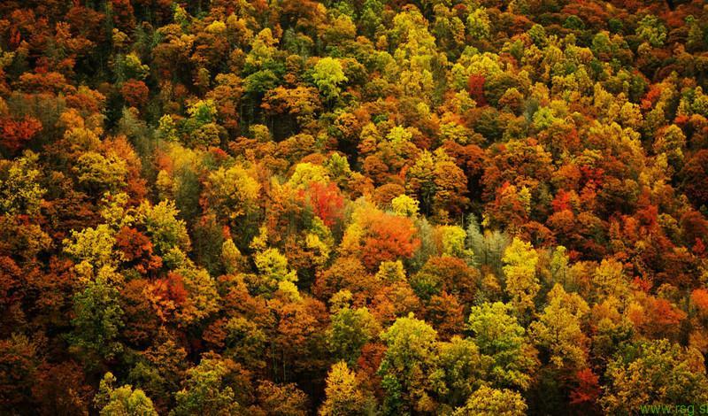 V Slovenskih goricah prevladujejo listnati gozdovi