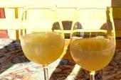 Strokovno srečanje Jurovskih in Trojiških vinogradnikov