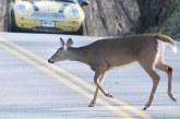 Razmere za divjad so se zaradi visoke snežne odeje občutno poslabšale
