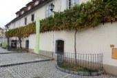 To nedeljo na Mariborskem Lentu svečana 30. trgatev najstarejše trte na svetu