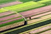 Za jesensko gnojenje uporabljamo gnojila brez dušika
