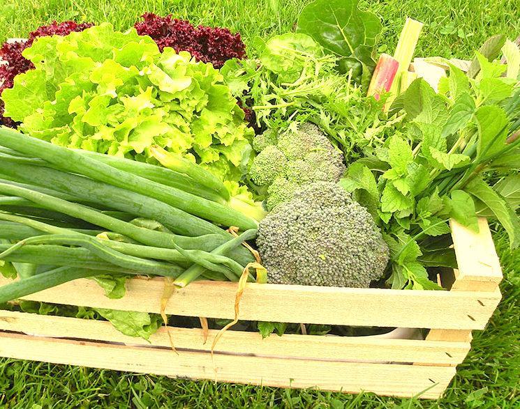 Evropske spodbude za več lokalno pridelanega sadja in zelenjave v naših šolah in vrtcih