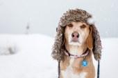 V zimskem času je potrebno za živali ustrezno poskrbeti