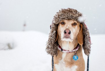 V času nizkih temperatur ustrezno poskrbite za živali