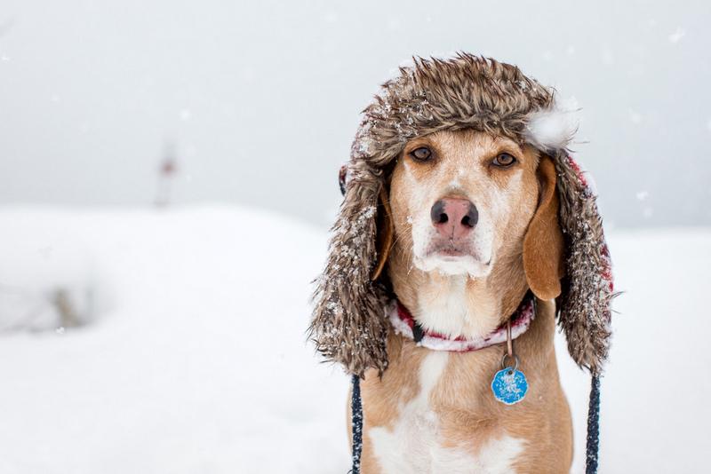 V hudem mrazu je potrebno ustrezno poskrbeti za živali