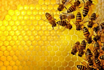 Zbor članov Čebelarskega društva Sveta Trojica – Lenart