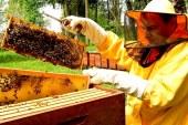 Slovenija s slavnostnim sprejemom proslavila razglasitev 20. maja za svetovni dan čebel