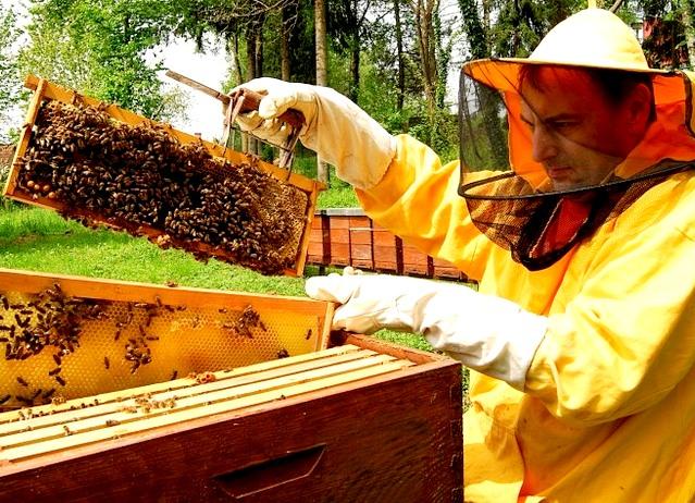 Po zimi se prebujajo tudi čebele in čebelarji
