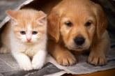 Pirotehnika je za živali stresna in nevarna