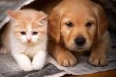 Ugodna sterilizacija in kastracija živali v pomurju