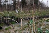 FOTO: Spomladansko vandranje v Drevesničarstvo Čeh