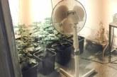 En največjih zasegov prepovedane droge na območju PU Maribor