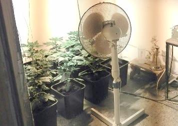 Odkrit prirejen prostor za gojenje prepovedane droge konoplje