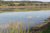 Na območju jezera Komarnik domuje okoli 250 vrst ptic