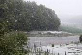 Sneg polomil več dreves in povzročil škodo na rastlinah