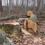 Aktualna opravila v gozdu