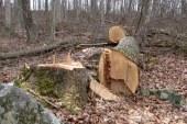 100 mariborskih gozdarjev ostalo brez dela