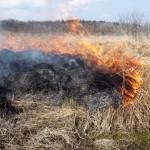 Občanka zakurila suho travo in podrast – Zaradi vetra ji je ogenj ušel izpod nadzora