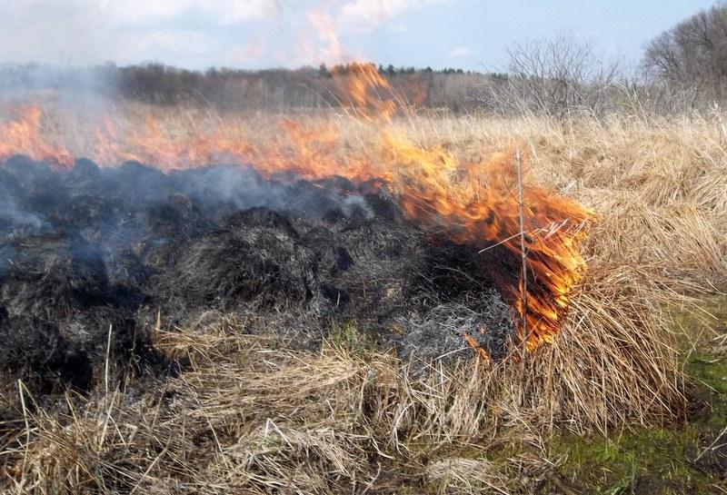 Občanka zakurila suho travo in podrast - Zaradi vetra ji je ogenj ušel izpod nadzora
