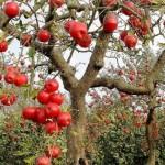Sadjarji in vinogradniki tudi letos iščejo pomoč v obliki sezonskega dela