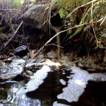 Gnojnica onesnažila reko Ščavnico